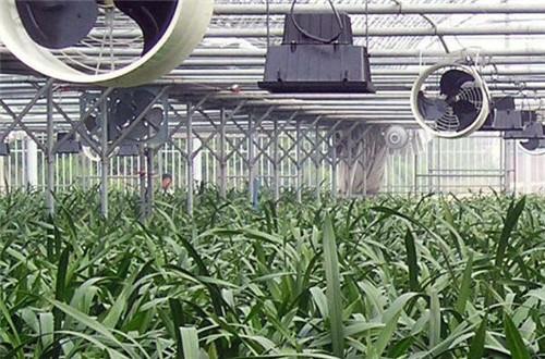 无土栽培一般需要投入多少钱?适合的蔬菜有哪些?